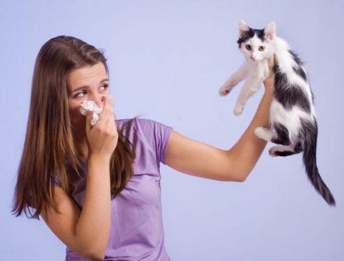 KHông nên tiếp xúc với mèo khi mang thại